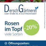 Rosen Aktion -20%