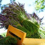 Blumen- und Pflanzenpflege im August