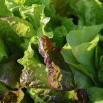Kräuter- und Gemüsetipps im August