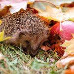 Bunt in den Herbst
