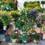 Buntes für Balkon, Terassen und Blumenbeete